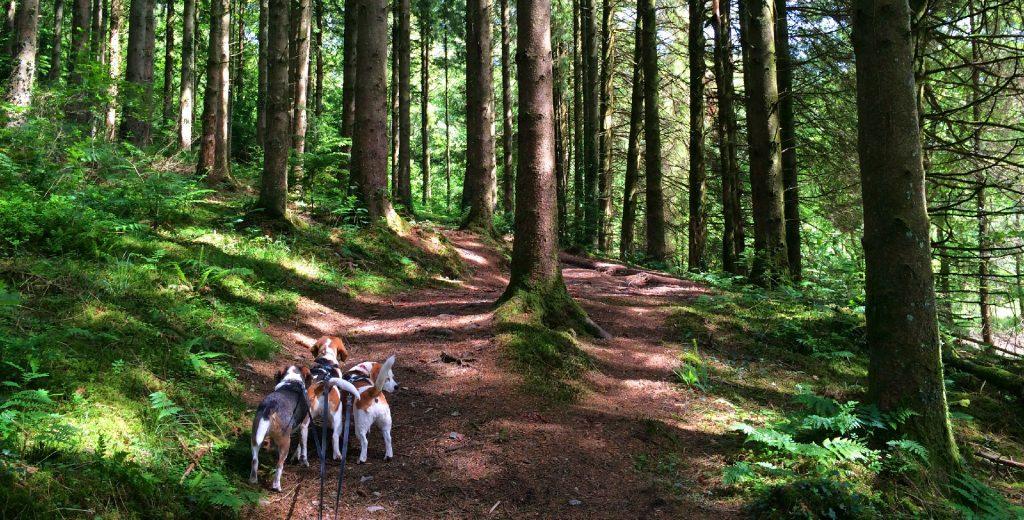 Dog Friendly Walking Brechfa Forest Barns
