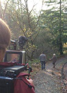 Dog friendly walks in Brechfa Forest