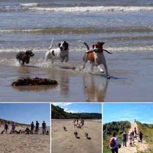 Amazing walks & dog friendly beaches